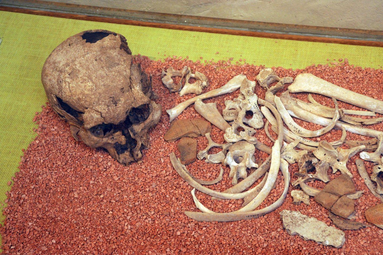 Musée Ossau- sepulture age du bronze